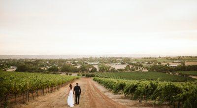 Lloyd Brothers, McLaren Vale, Winery, Olive Grove, Modern White Wedding Venue, Fleurieu Peninsula